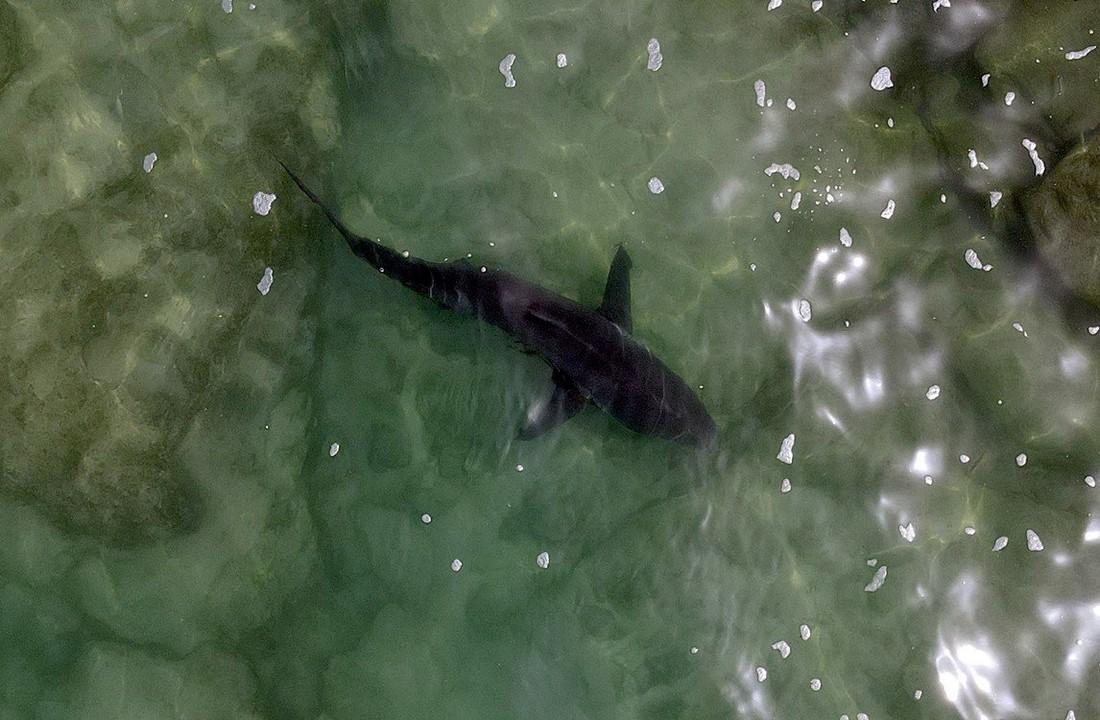 Акулы плавают рядом с отдыхающими у побережья Израиля