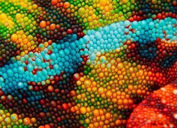 Скрытый мир на интересных макрофотографиях