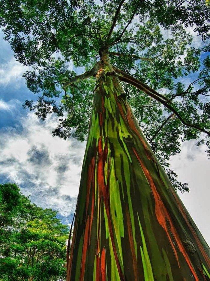 Кора этих деревьев поразит вас своей красотой