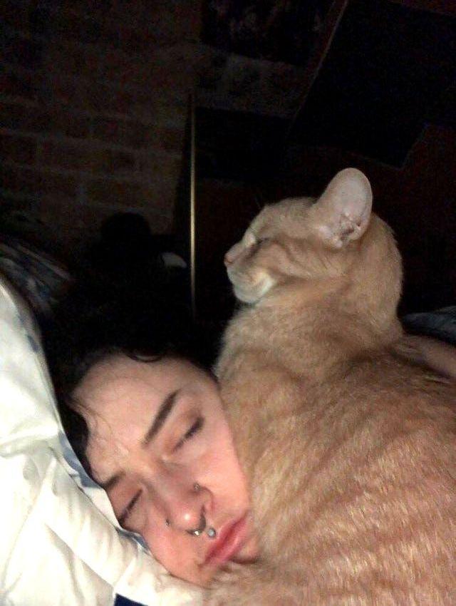 Котики, которые очень плохо себя вели