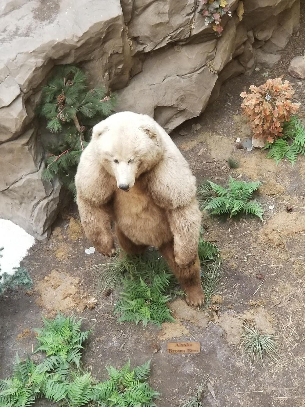 Подборка снимков с разными крупными животными и предметами