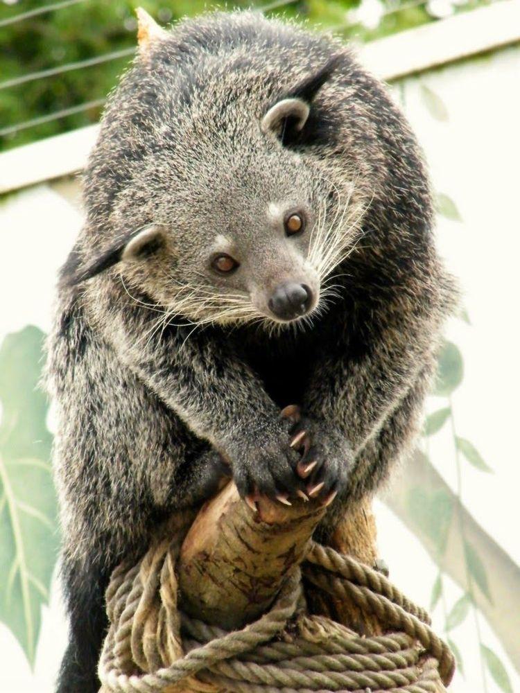 Уникальные животные с очень необычным внешним видом