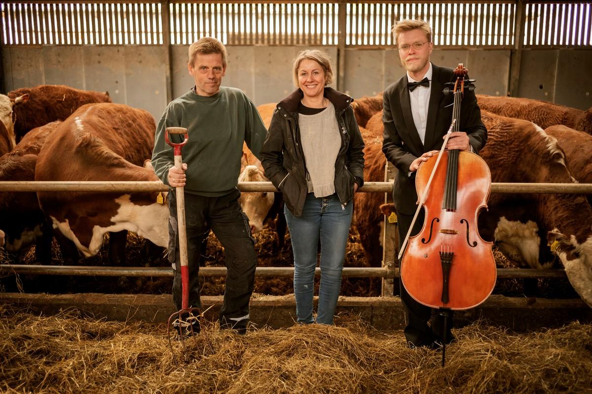 Коровы в Дании снимают стресс, слушая классическую музыку