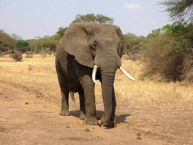 Самые сильные среди животных нашей планеты