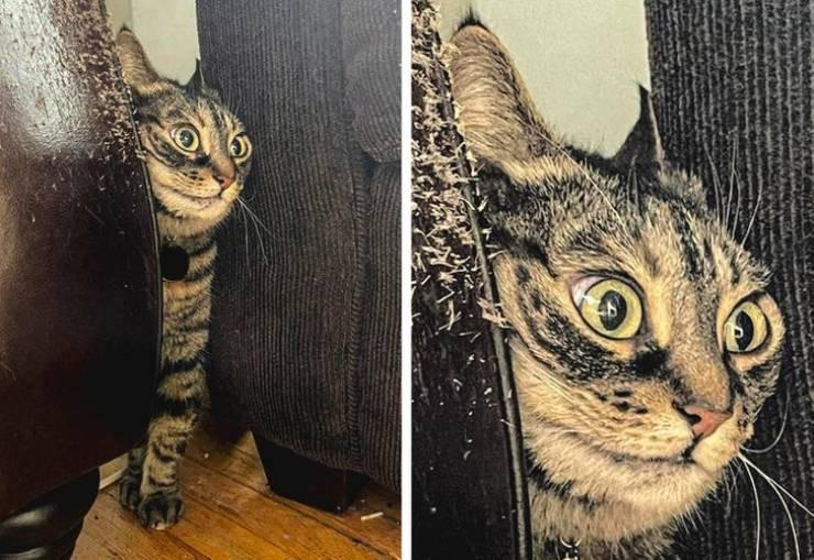 Иногда животные как-то слишком похожи на людей Животные