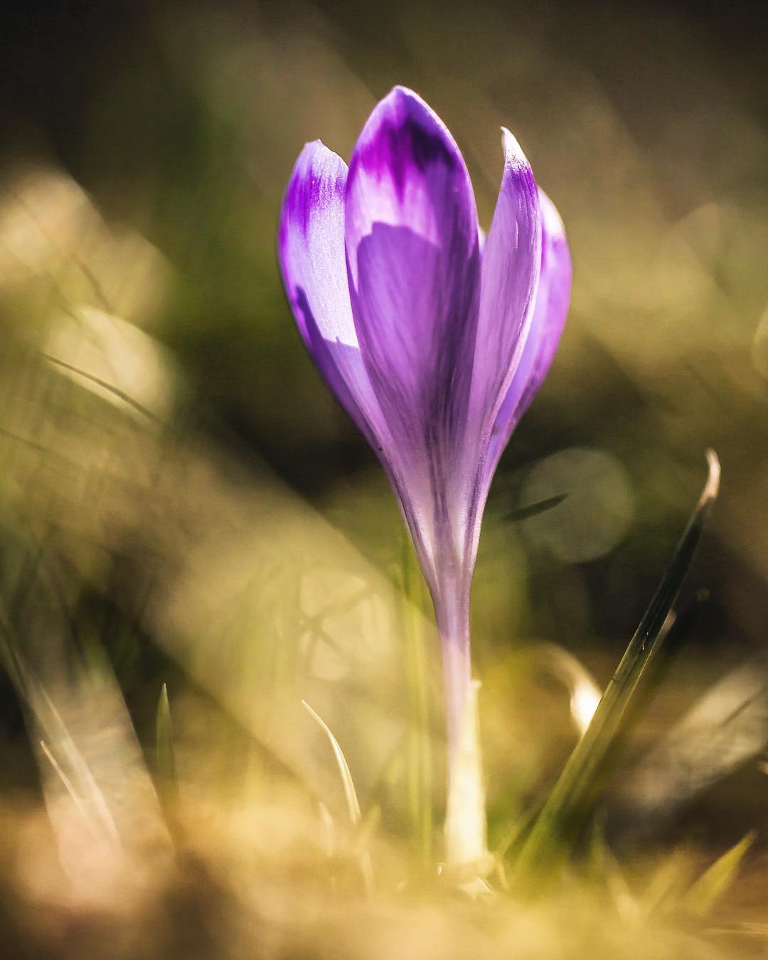 Красивые цветы и насекомые на снимках Сильвии Кобеловой