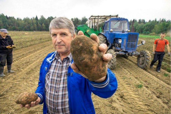 Правда ли, что картошку в Россию привезли крестьяне?