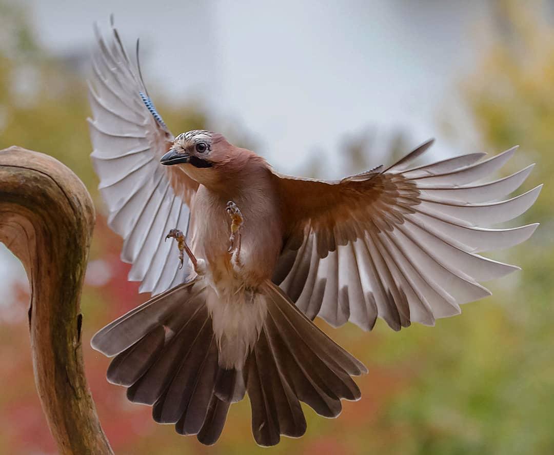 Красивые птицы на снимках от Kotics Zsolt