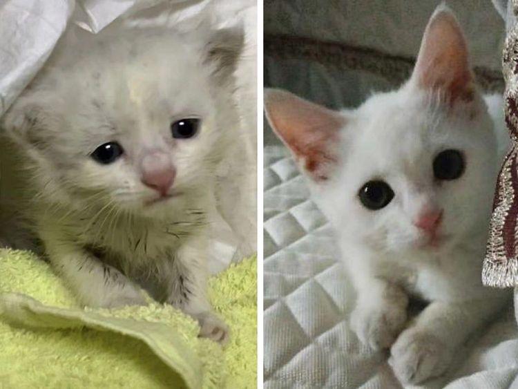 Эти животные были бездомными, но добрые люди подарили им семью