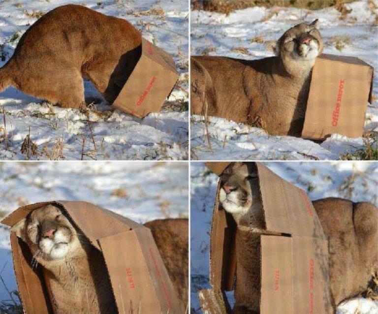 Из-за чего кошки любят сидеть в коробках и пакетах