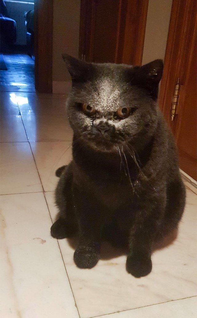 Иногда домашние животные могут выглядеть пугающе