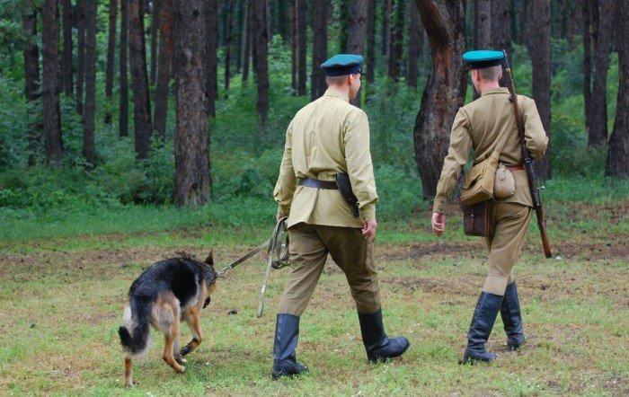 Противотанковые собаки во время Великой отечественной войны