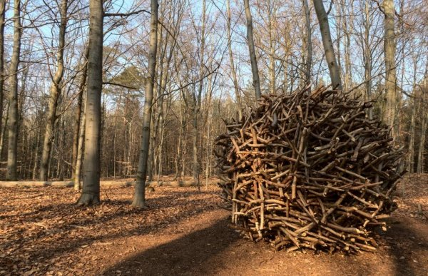 Неожиданные и жуткие находки, сделанные в дремучем лесу