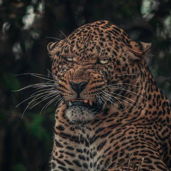 Снимки покажут мир животных с новой стороны