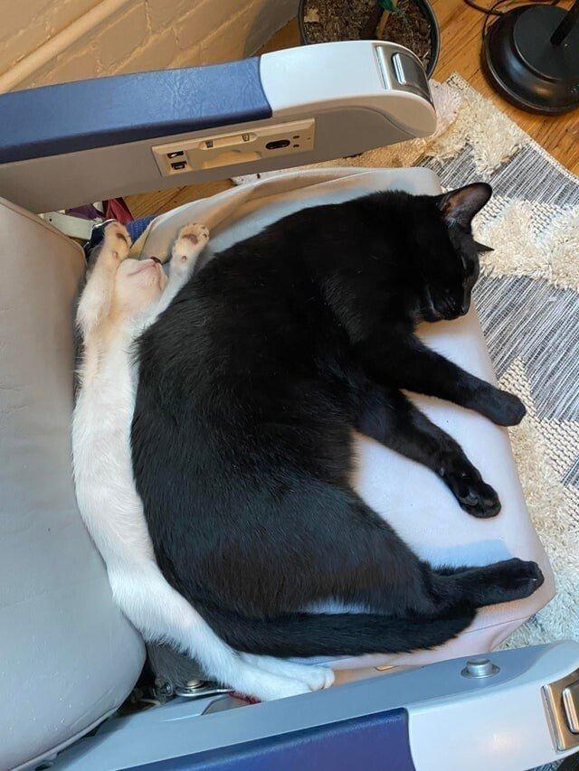 Лучше одного котика в доме могут быть только два