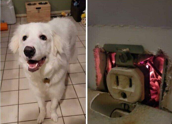 Трогательные снимки с собаками, которые греют душу