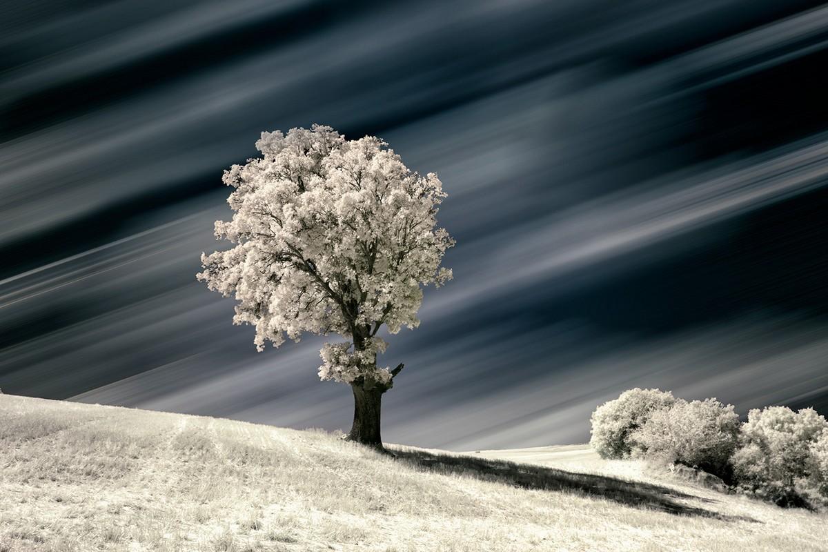 Захватывающие инфракрасные пейзажи от Марты Боррегуеро