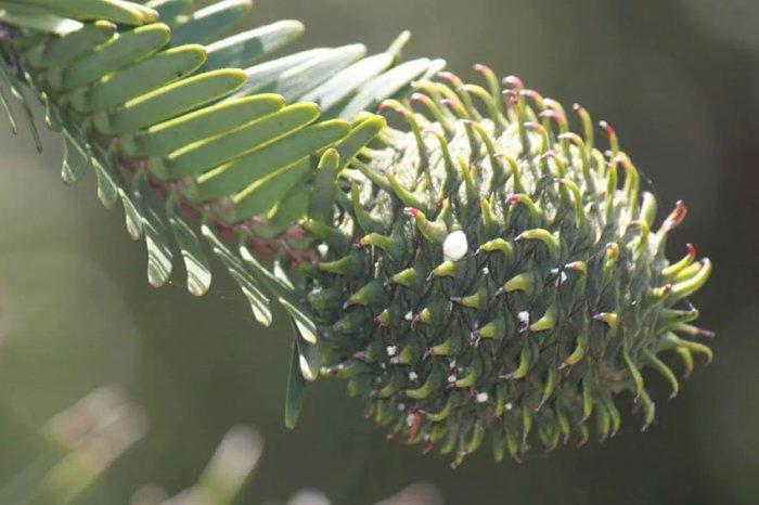 Очень странные растения нашего мира