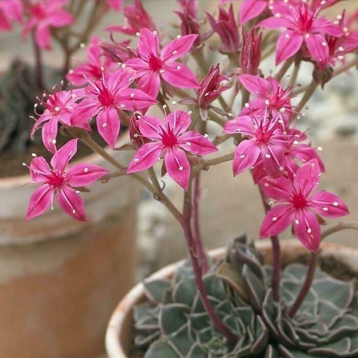 Растения умеют удивлять и восхищать разными способами