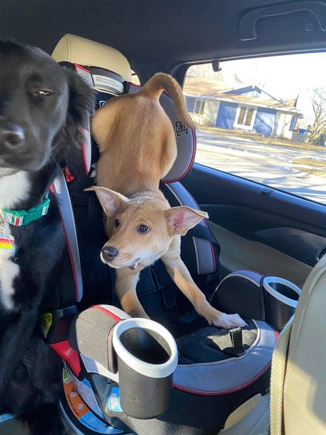 Эти собаки сломались и делают странные вещи