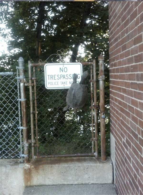 Забавные животные, которым плевать на все запреты
