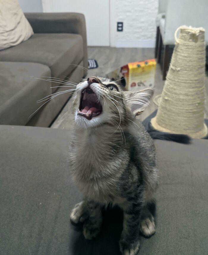Снимки котиков, которые содержат в себе звук
