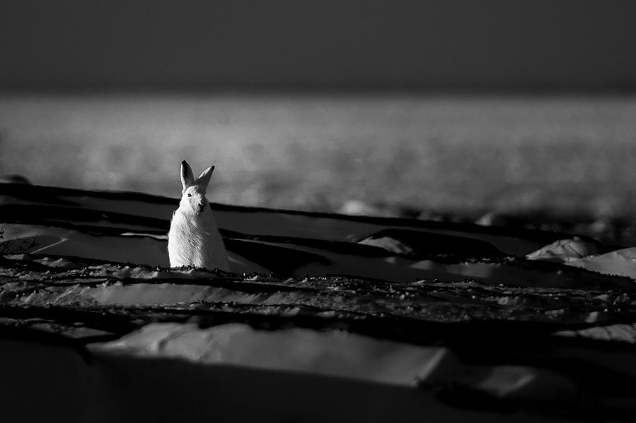 Выразительные черно-белые снимки животных от Марко Ронкони