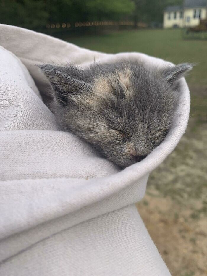 Бездомные животные, которые узнали, что такое любовь человека Животные