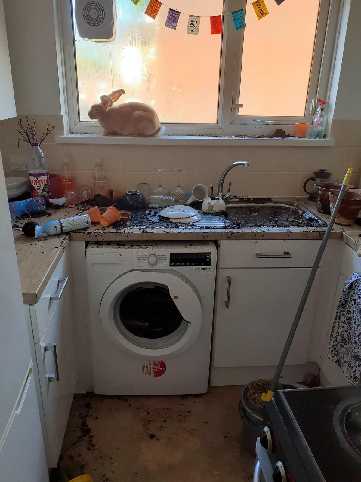Домашний кролик устроил потоп на кухне