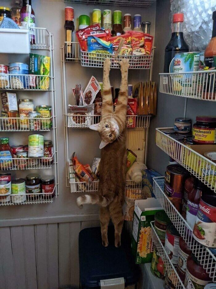 Котейки, которые внезапно сломались и требуют ремонта