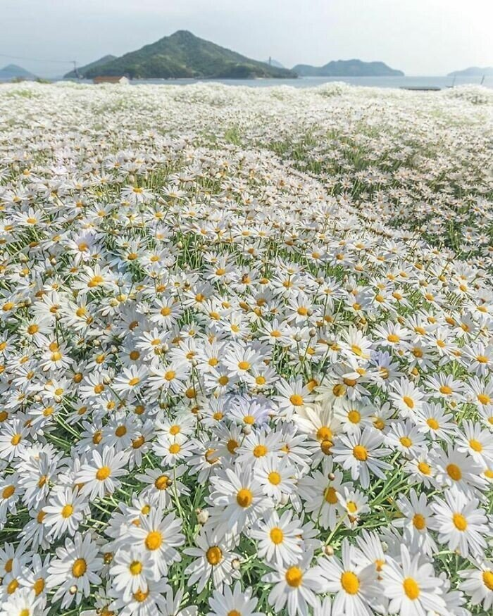Самые невероятные цветы и растения нашей планеты