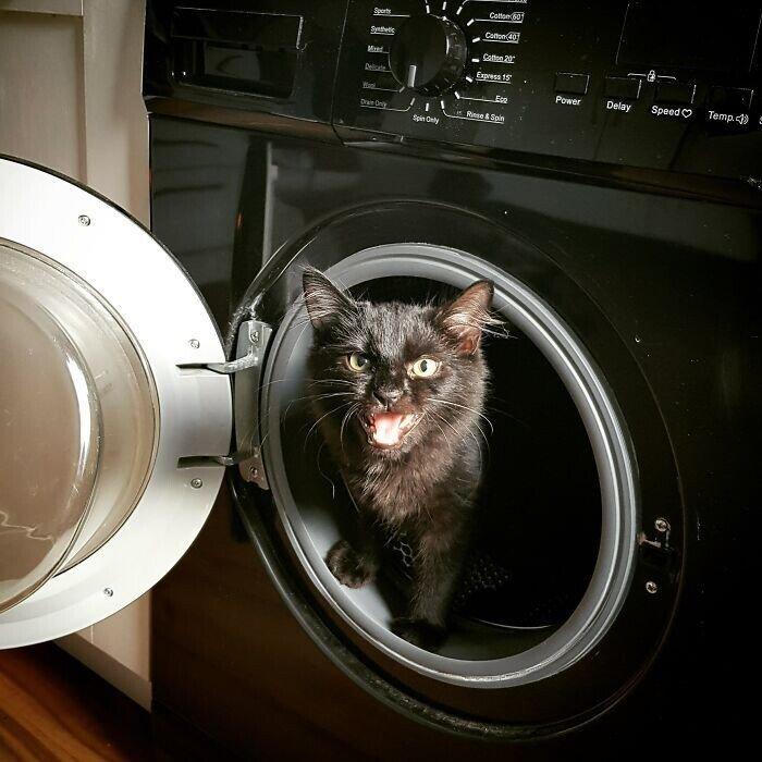 Недовольные котяры, которые громко заявляют о своих желаниях
