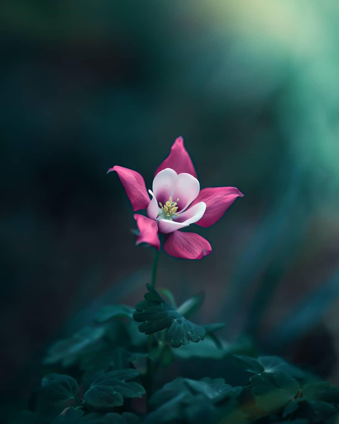 Красота цветов на снимках от Питера Висса