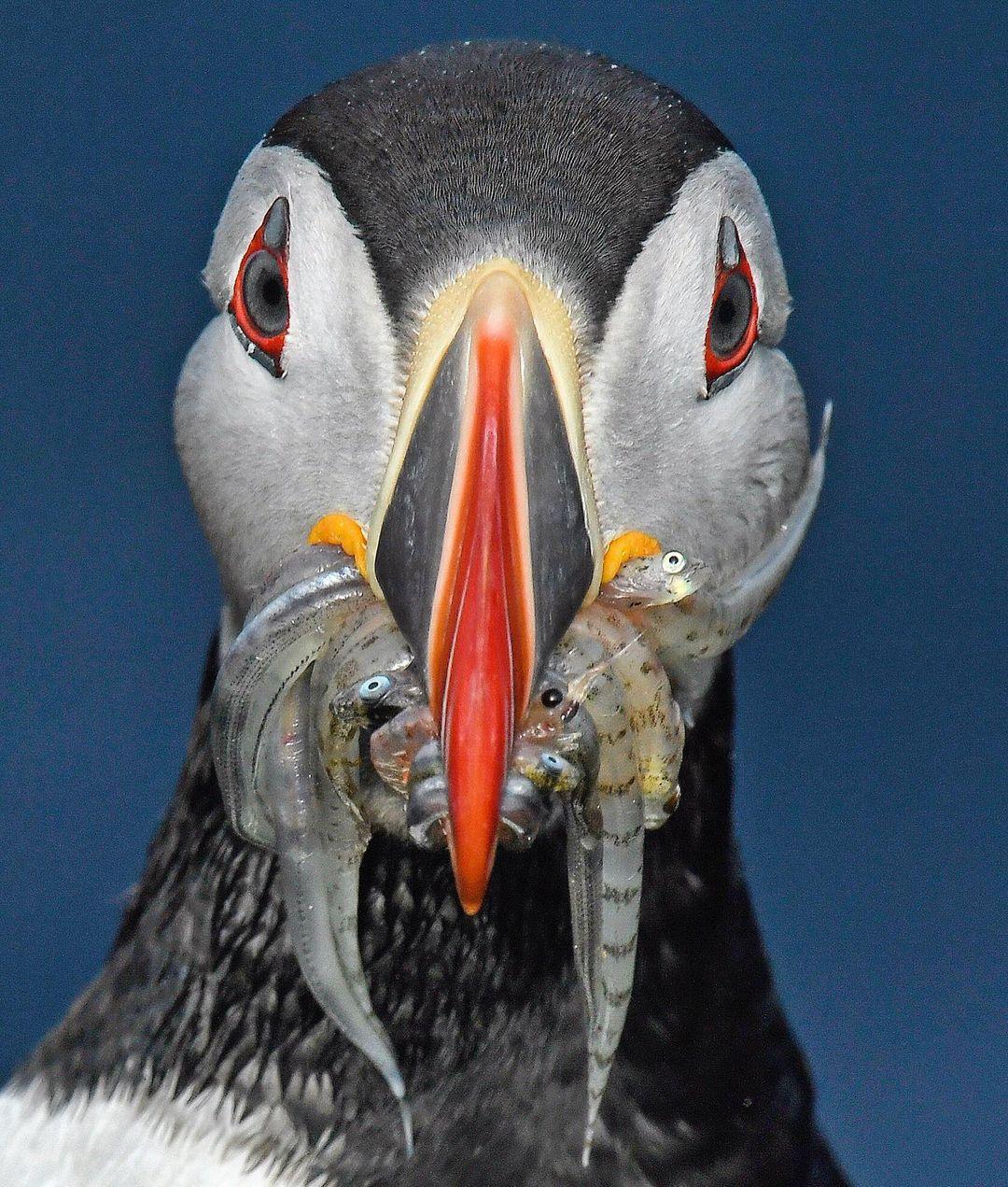 Природа и животные на снимках из путешествий Томаса Пескака