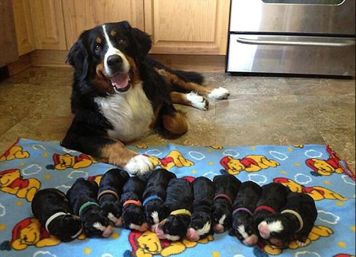 Счастливые мамочки-собаки со своими малышами