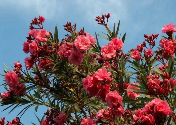 Опасные растения, которые можно встретить в наших краях