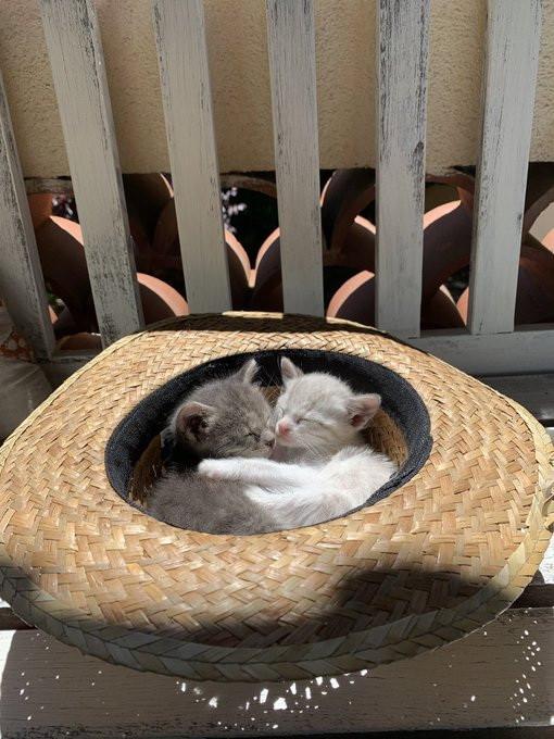 Котики оказались там, где их не должно быть, но они могут себе это позволить