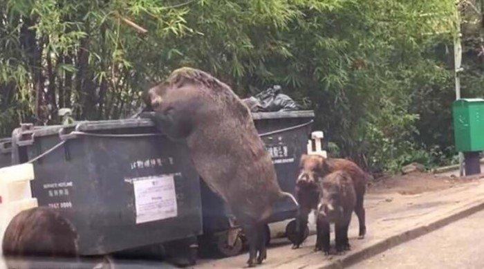 Вещи, люди и животные, истинные размеры которых познаются в сравнении