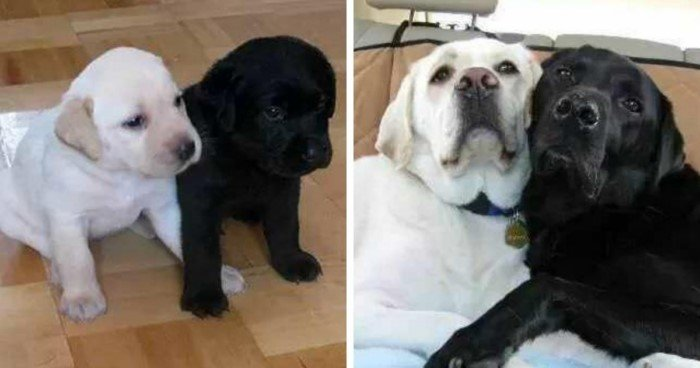 Очаровательные щенки, которые так быстро выросли во взрослых собак