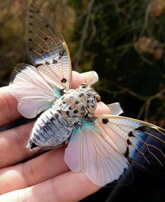 Природа может внезапно показать нечто редкое и удивительное