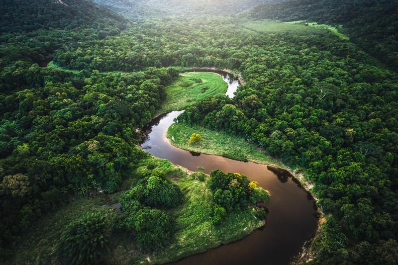 Самые большие лесные зоны в мире