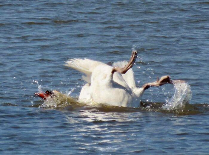 Неудачные, но смешные и забавные фотографии дикой природы