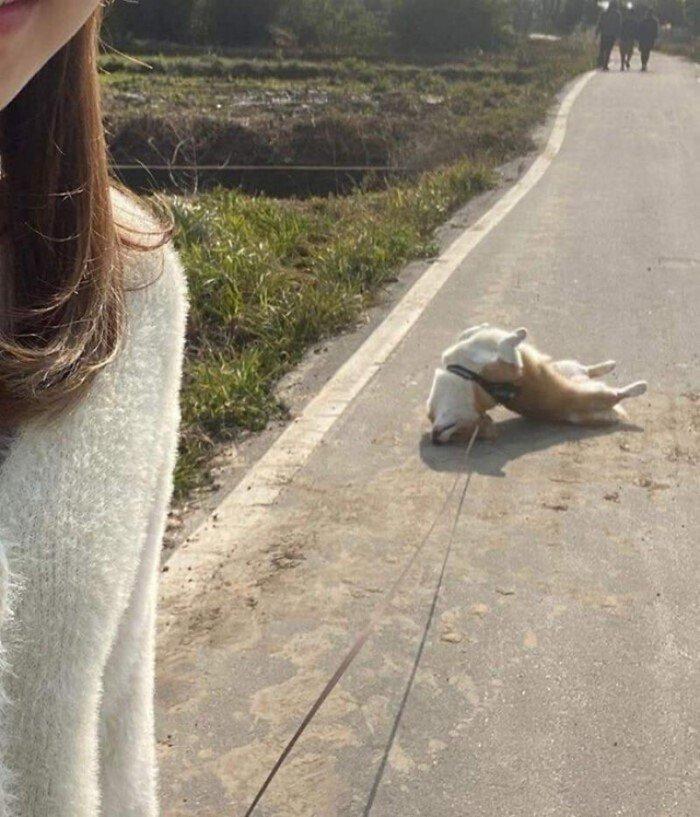 Позитивные собаки на снимках, которые способны улучшить настроение