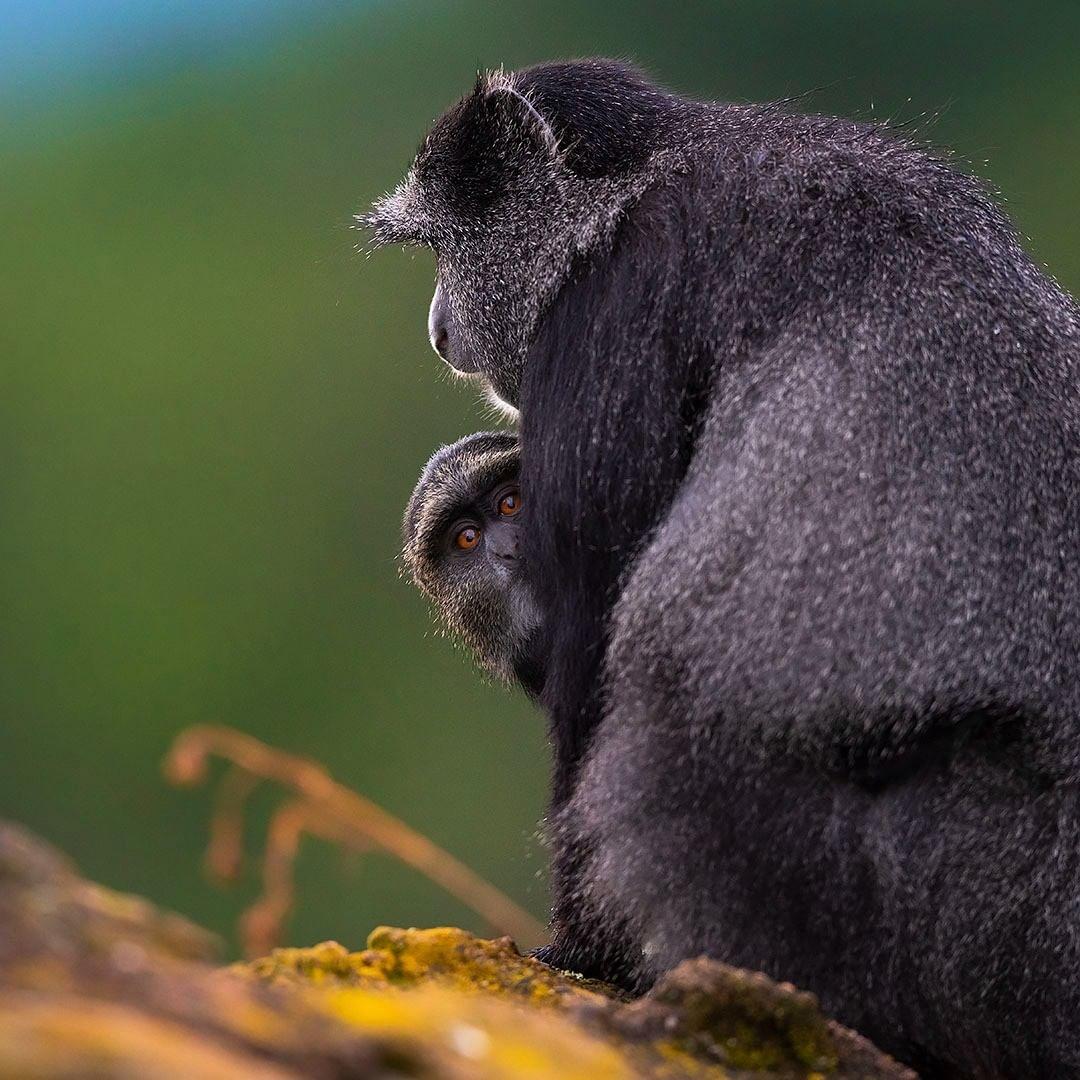 Дикие животные на снимках от Даниэля Розенгрена