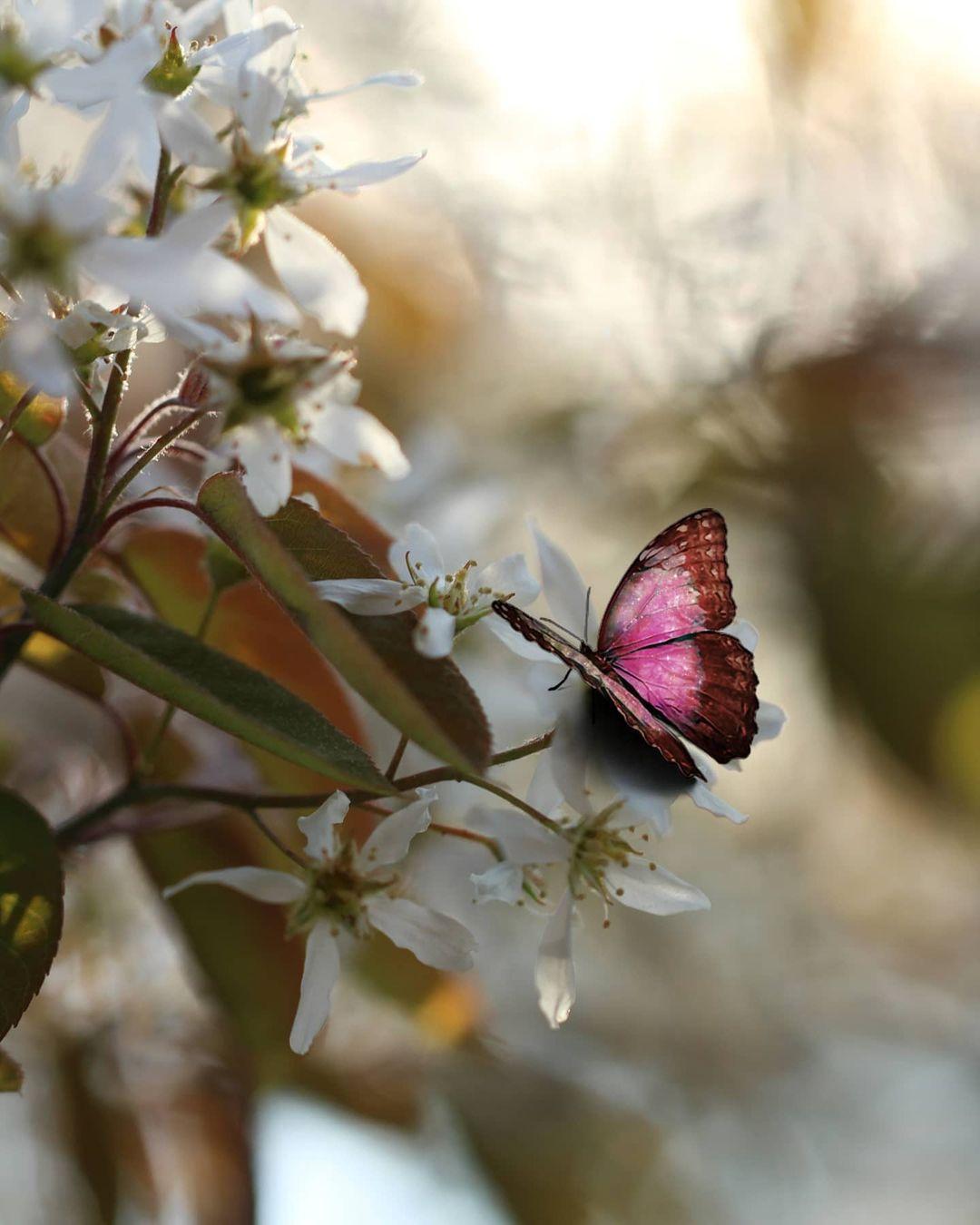 Красивые снимки цветов от Таши Тайдель