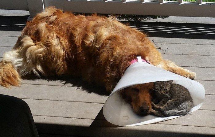 Дружба и романтика на трогательных снимках животных