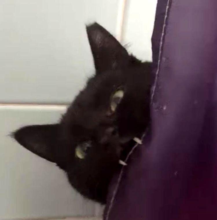 Котики с выдающимися клыками, которых можно принять за пушистых вампиров