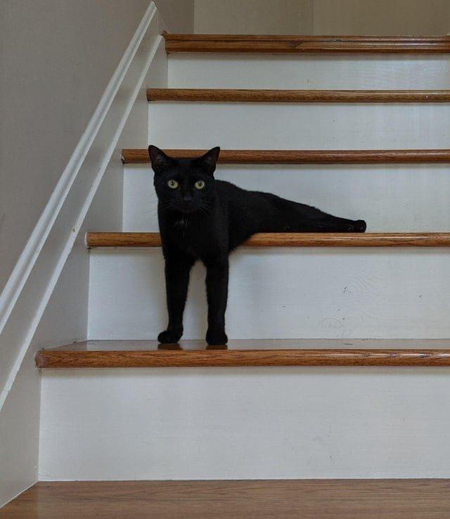 Котики, которые удивили хозяев своим чудаковатым поведением