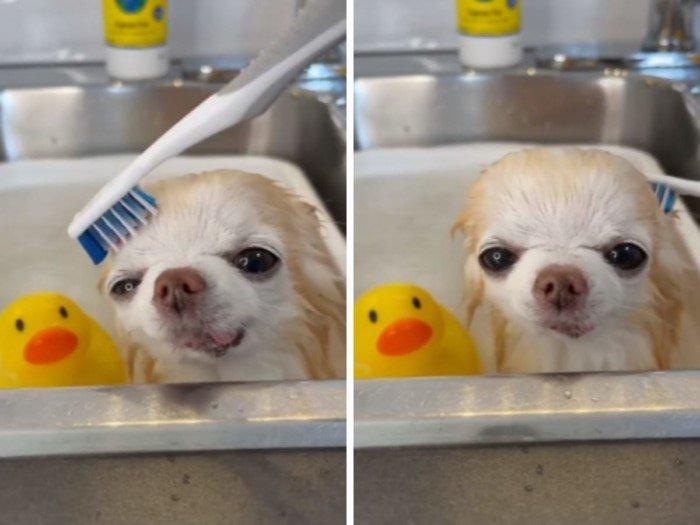 Купание вызывает у животных самые разные эмоции