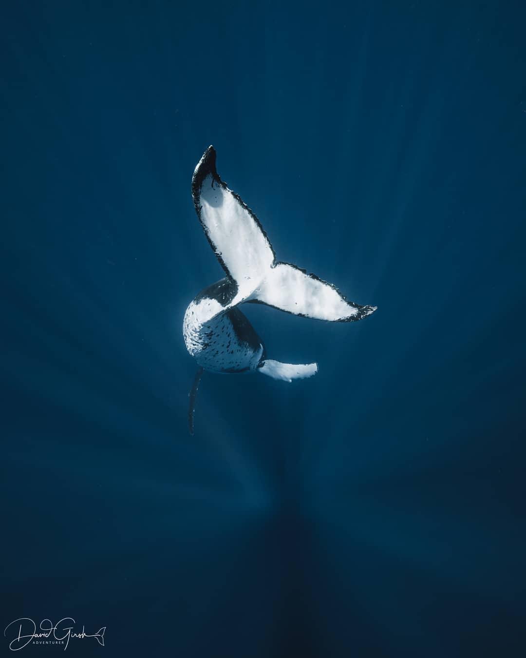 Удивительные подводные снимки от Дэвида Гирша